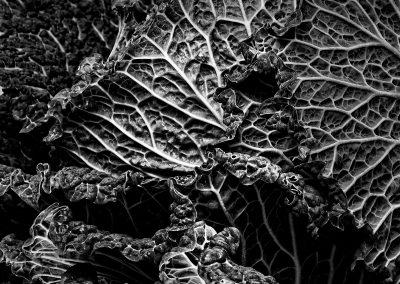 fruta-verdura-web-04-teresa-mar