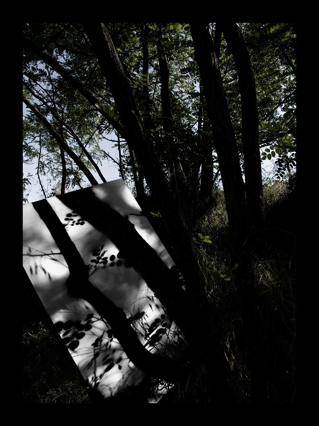 Ombra del bosc II
