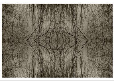 web Bosque Celeste-22 (60x90)