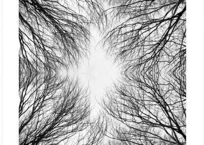 web Bosque celeste-42(60x80)