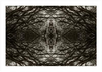 web Origen del Caos (70x100)